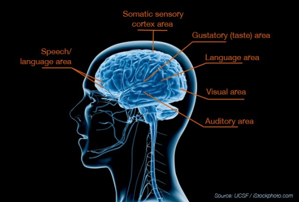 The Essence Of Sensory Processing >> Ucsf Study Finds Biological Basis For Sensory Processing