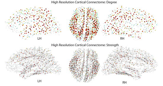 cortical connectome