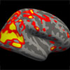 Analysis of relationship between cerebral morphology and neurocognitive development