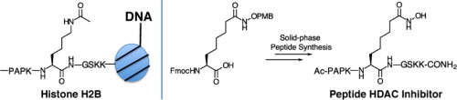 Solid phase synthesis of hydroxamate peptides for histone deacetylase inhibition