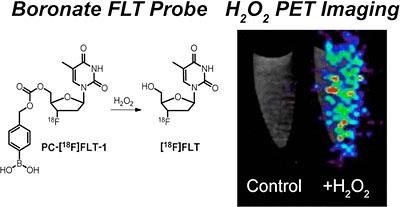 A boronate-caged 18F-FLT probe for hydrogen peroxide detection using positron emission tomography
